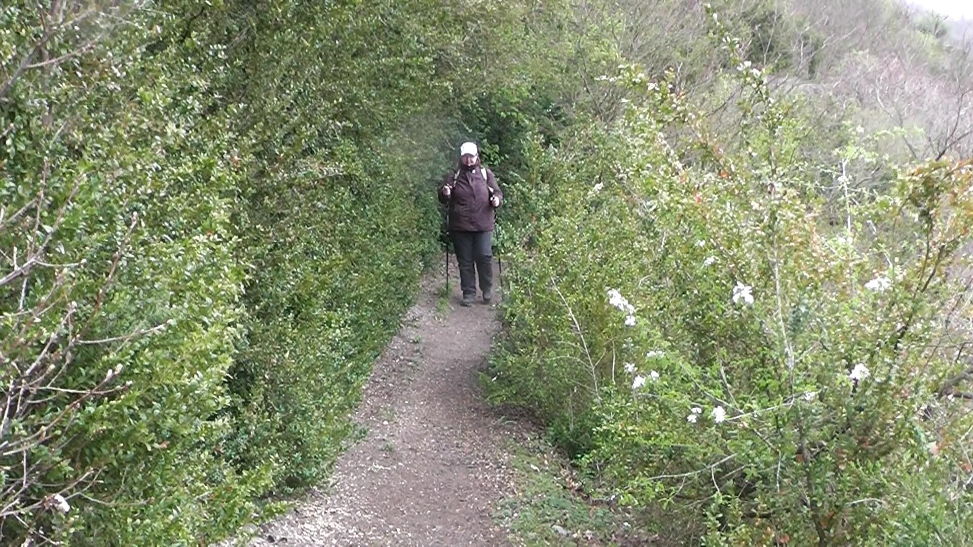 buchsbaum-wanderpfad1