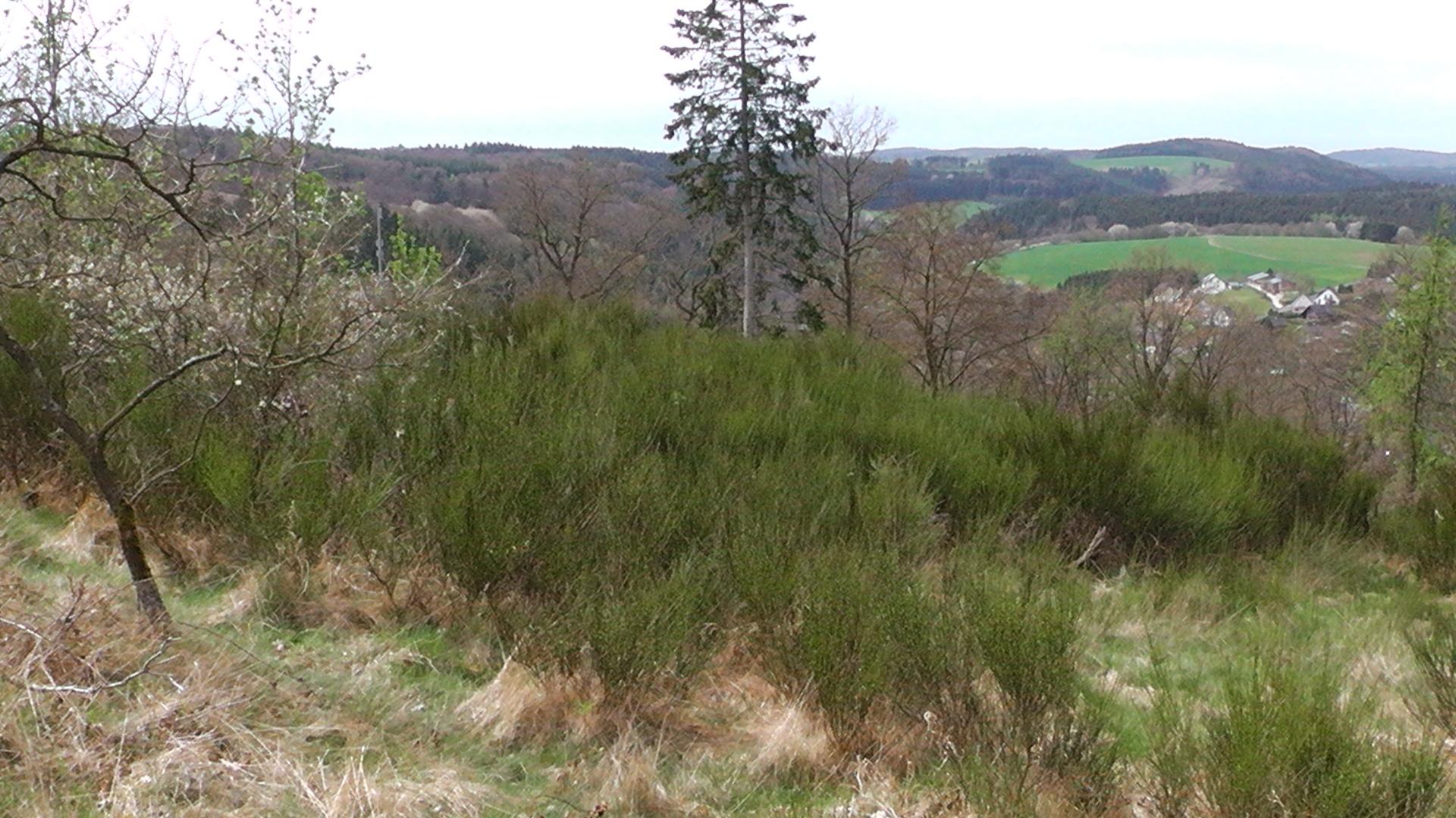 56-die-blumenrather-heide